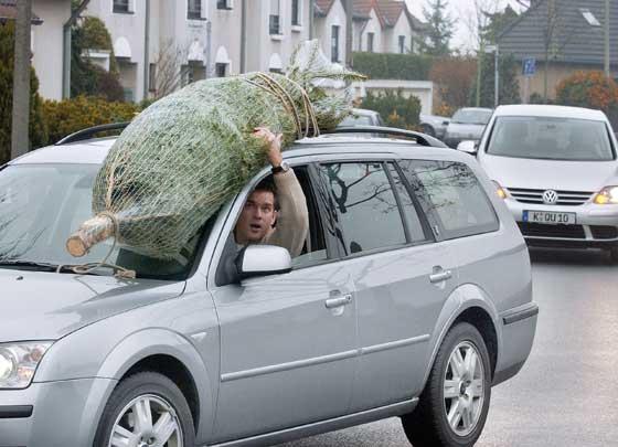 Wer Weihnachten mit einem echten Tannenbaum feiern möchte, sollte darauf achten, das Gehölz sicher und ohne Gefährdung anderer Verkehrsteilnehmer nach Hause zu transportieren. Foto: Allianz/dpp